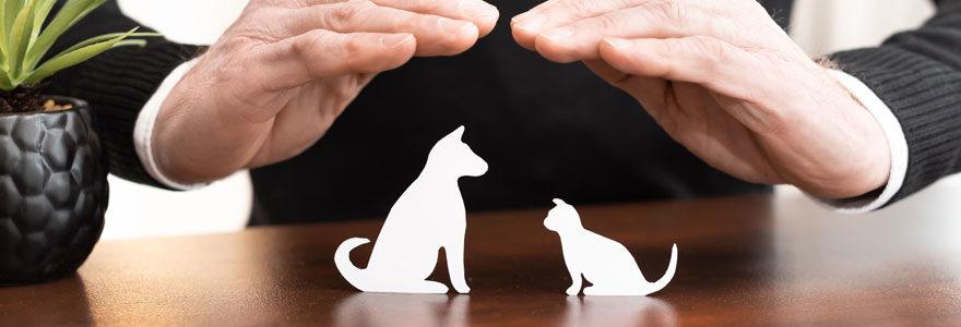 Assurer un animal de compagnie